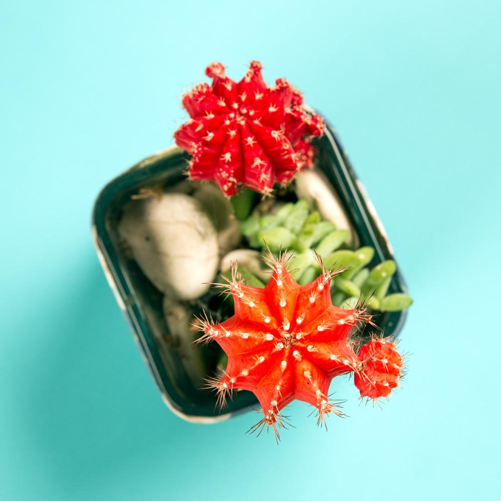 Desktop Florals 3.jpg