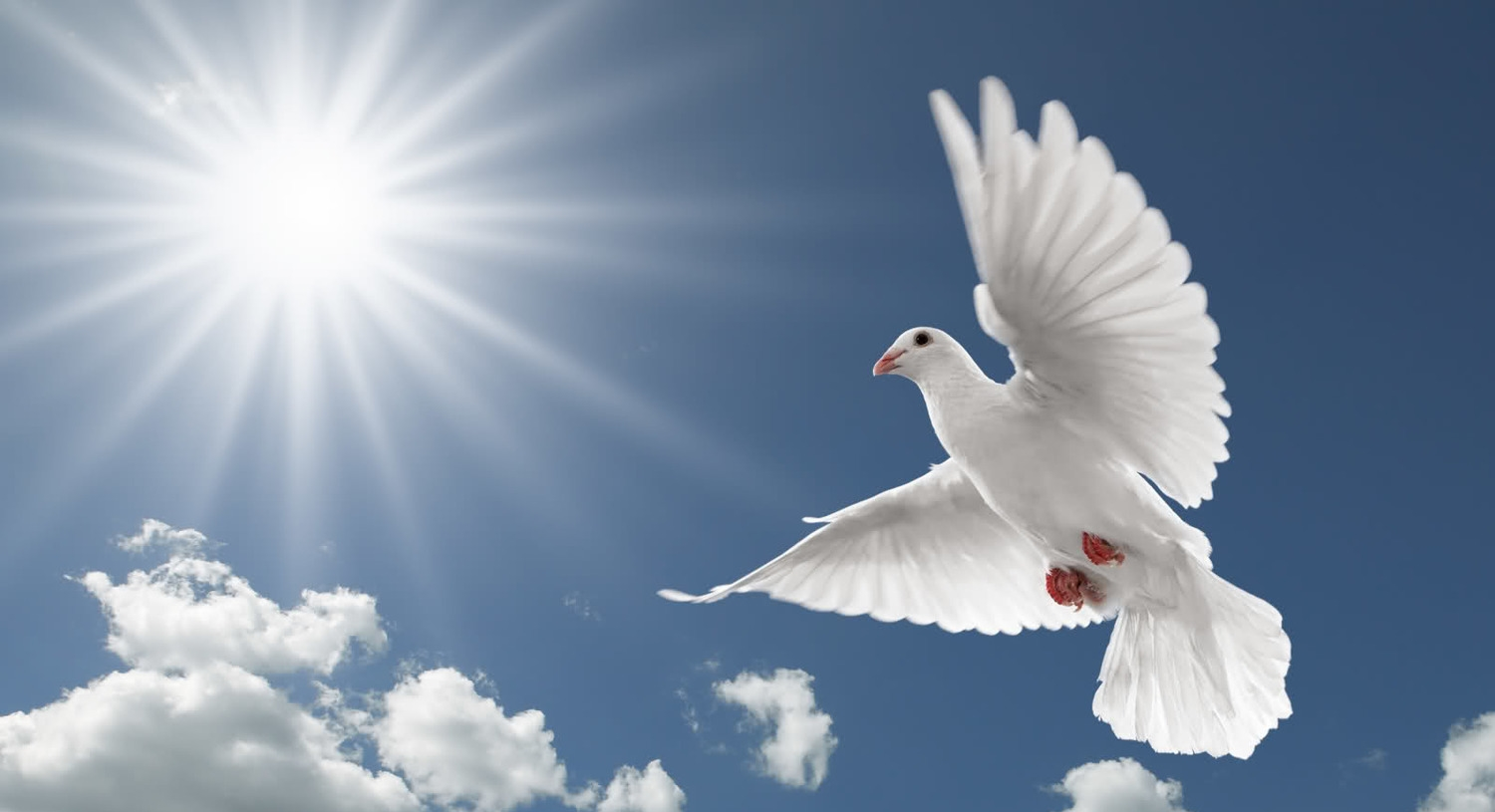 St louis mo white dove release company show me doves pigeon beautiful best hd wallpaperg voltagebd Gallery