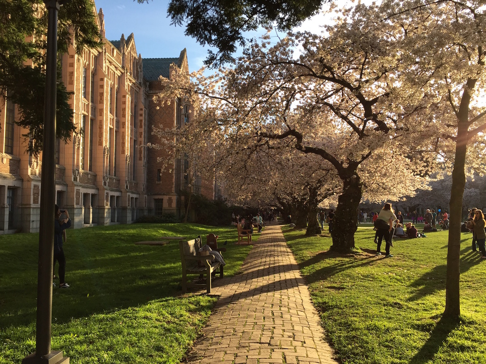Spring in the Quad. Photo Credit: Nelson Tang