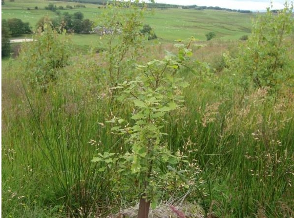 Topps Community Woodland planted saplings