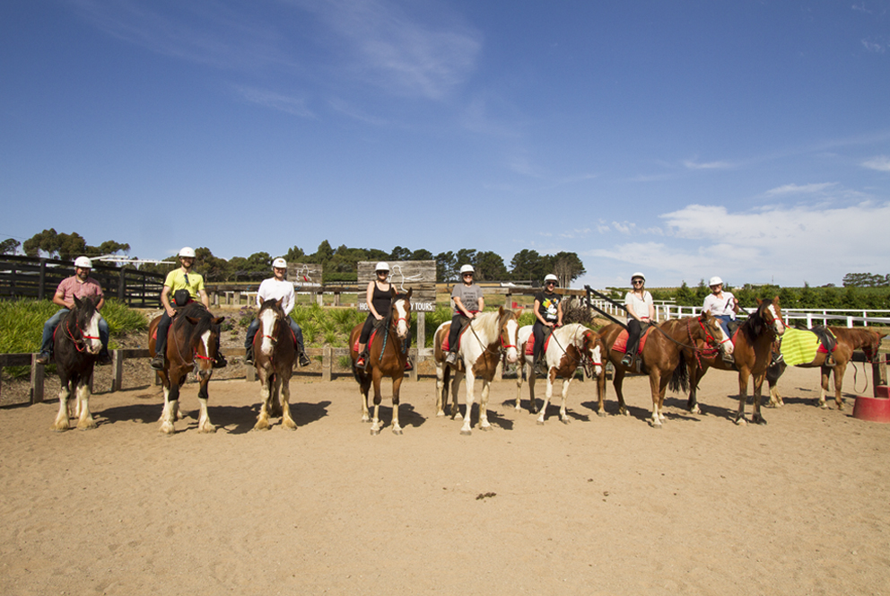 Horses_Lineup.jpg