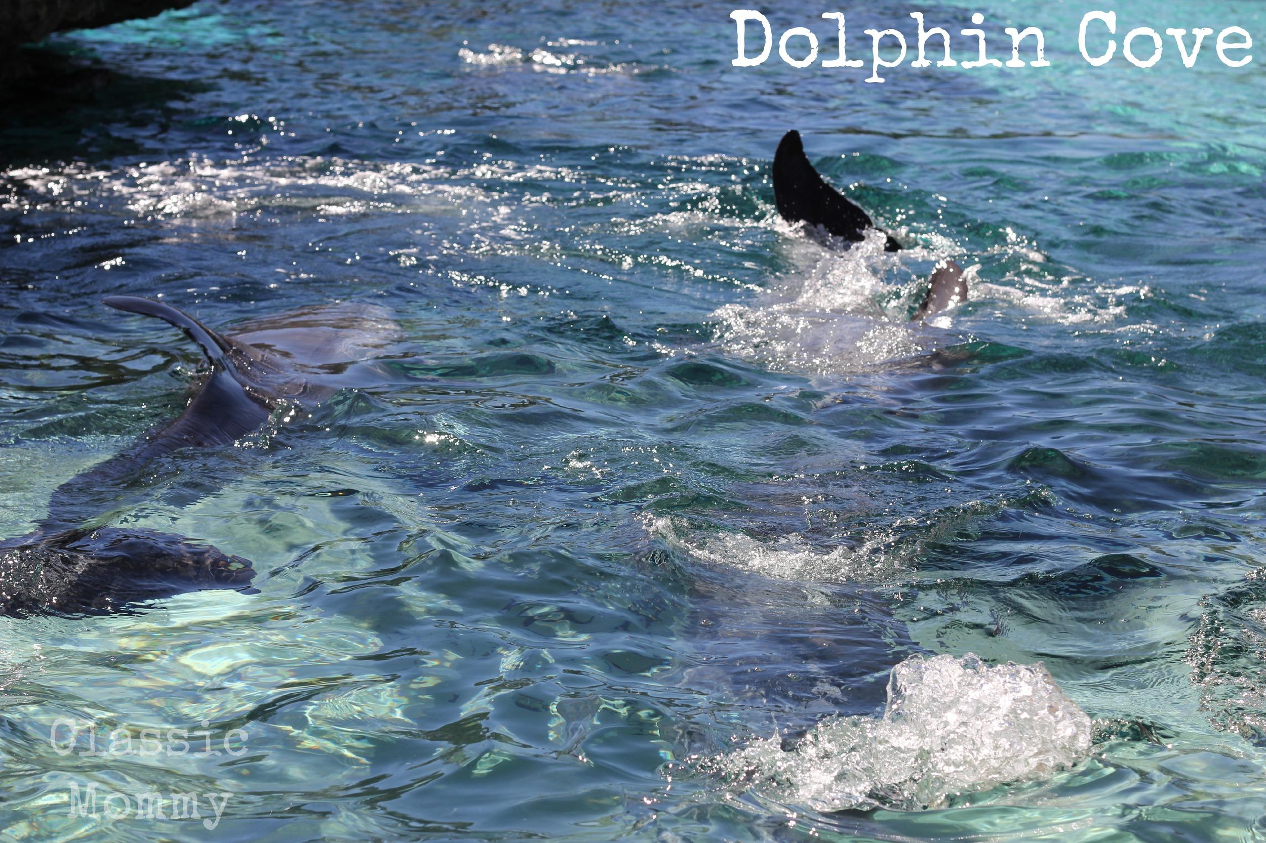 dolphin cove seaworld orlando