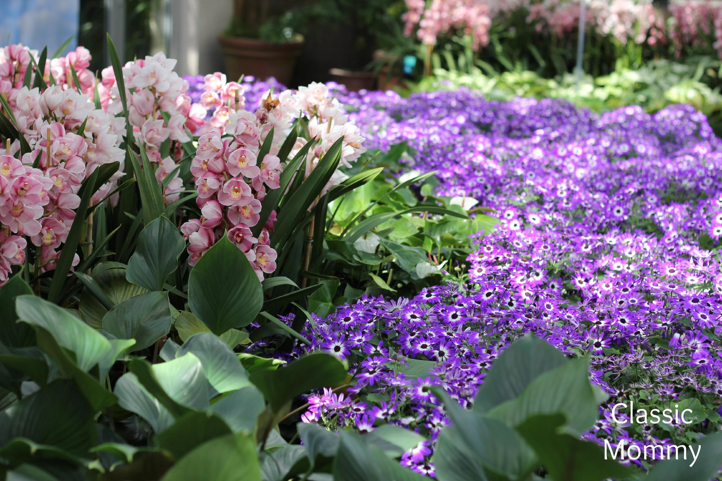 atlanta-botanical-flowers