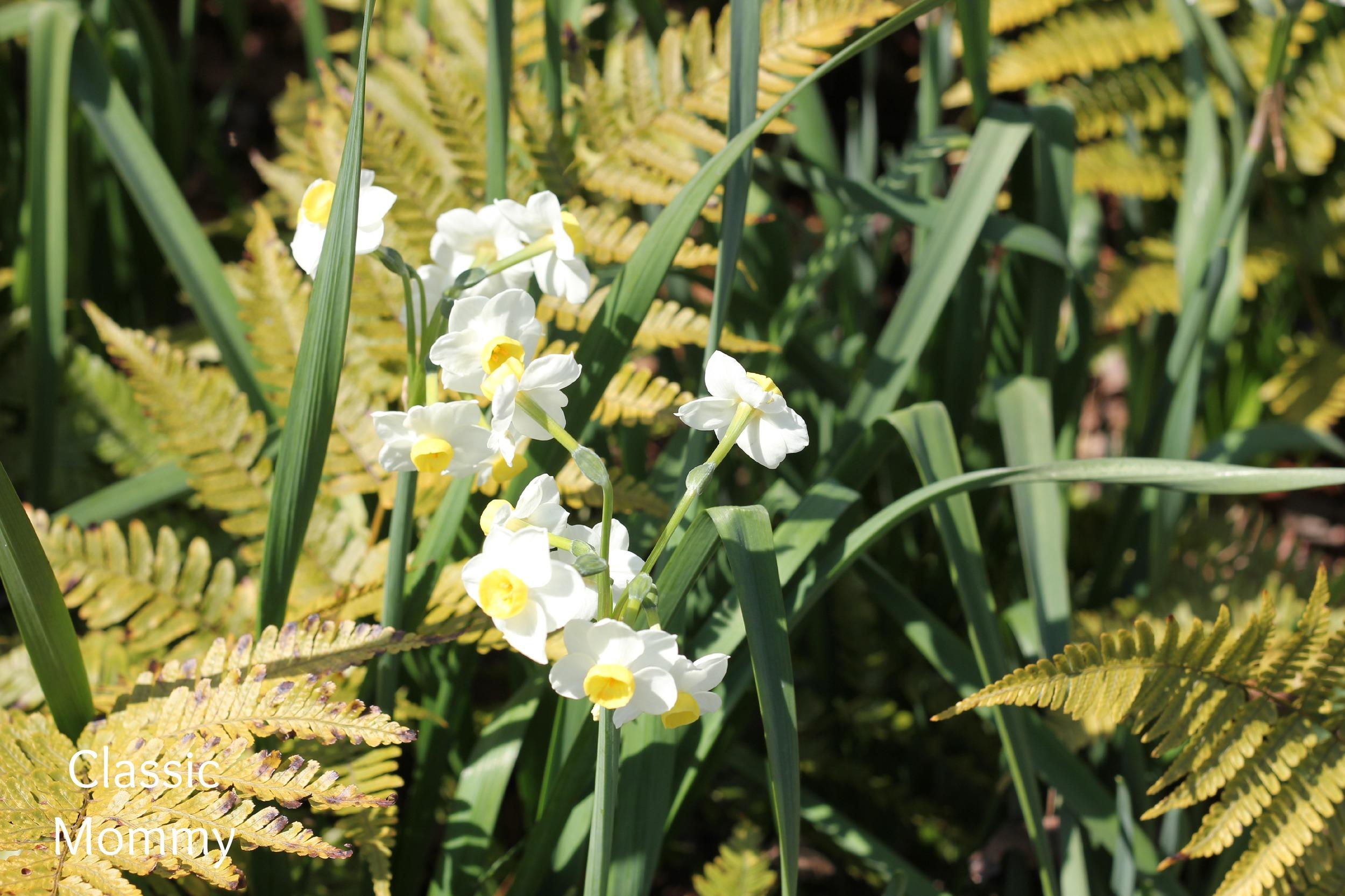 atlanta-botanical-garden
