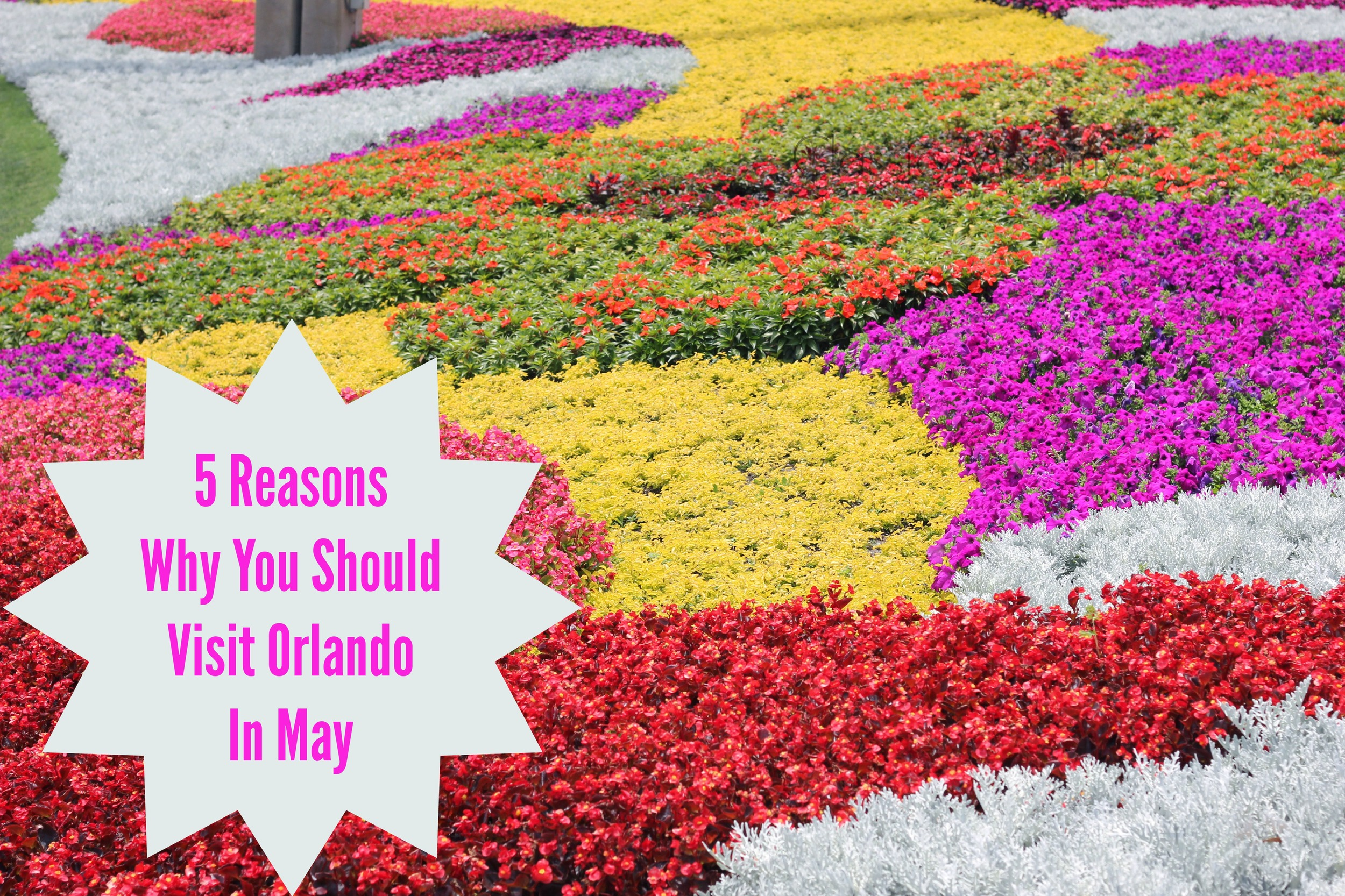 5 Reasons Why You Should Visit Orlando In May | Family Travel