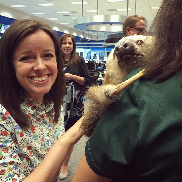 From this moment forward, my life will be split into two parts - Before Sloth and After Sloth. Harry is such a lovable little guy! Thanks for bringing him out to meet with us today, @buschgardens! Inspired to learn more about how I can help protect these vulnerable creatures!