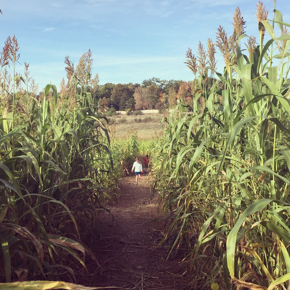 Running through the corn maze.