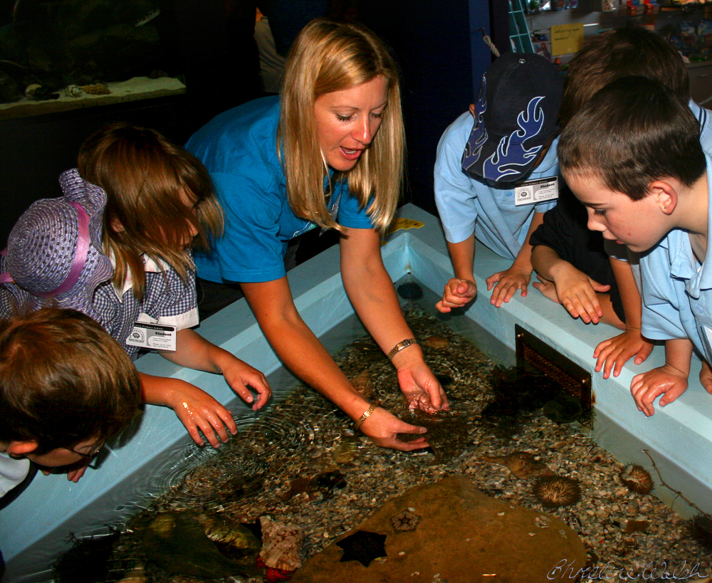 The Touch Tank at The Marine and Freshwater Discovery Centre