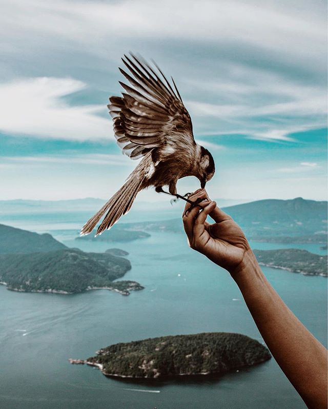 Making friends on the summit 🦅