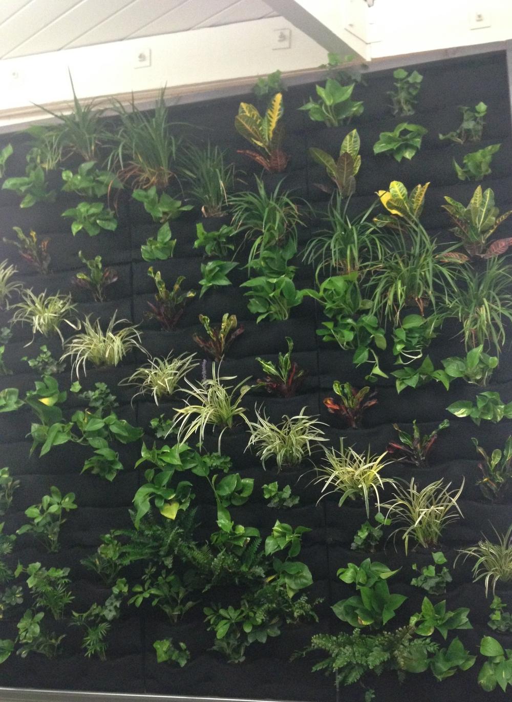 Go Plant Wall.JPG