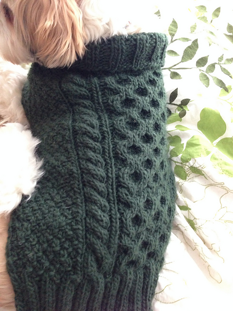 aran dog sweater.jpg