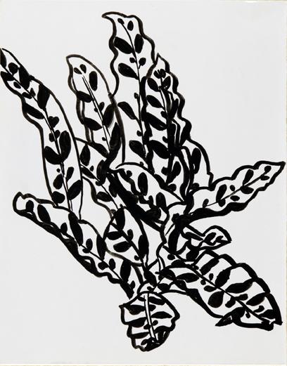 Garfield Conservatory: Plant Study #2