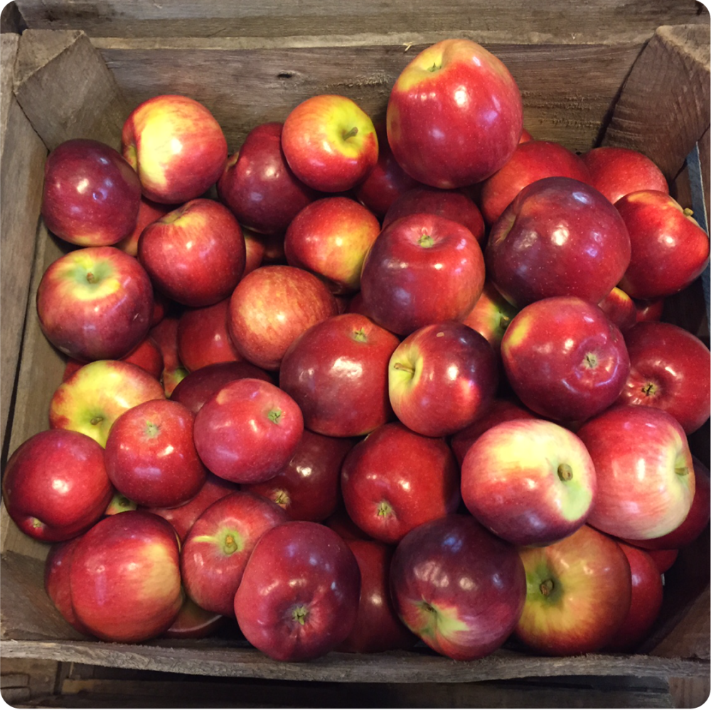 APPLES....We grow over 150 apple varieties. Come for your favorite or sample an apple variety you've never tasted before.