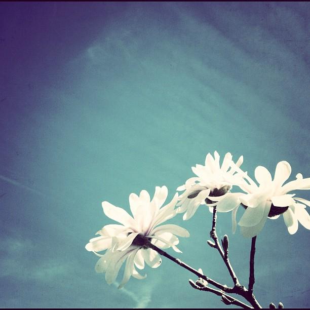 2012-03-24_1332615916.jpg
