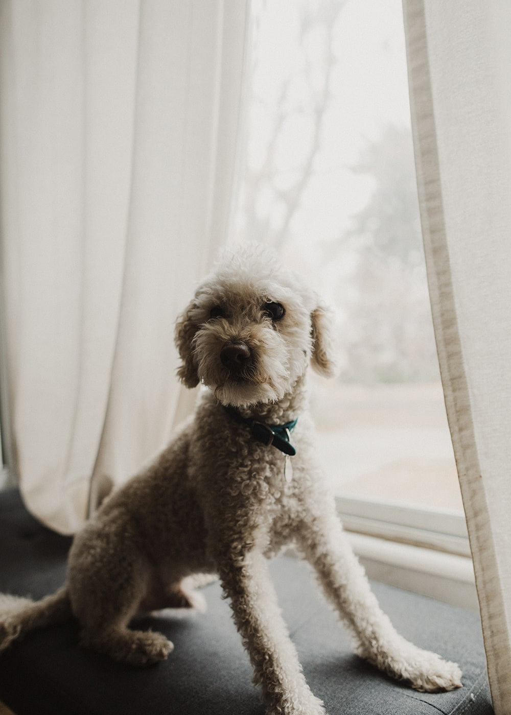 dog sitting on bench looking at camera in front of window