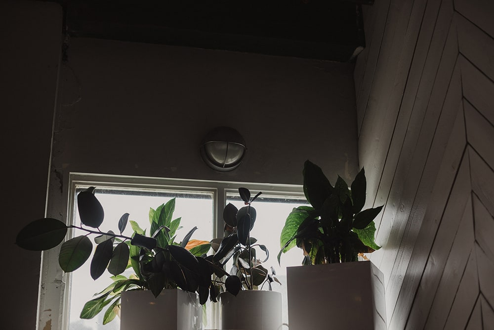 plants hanging in corner of union pine with backlight