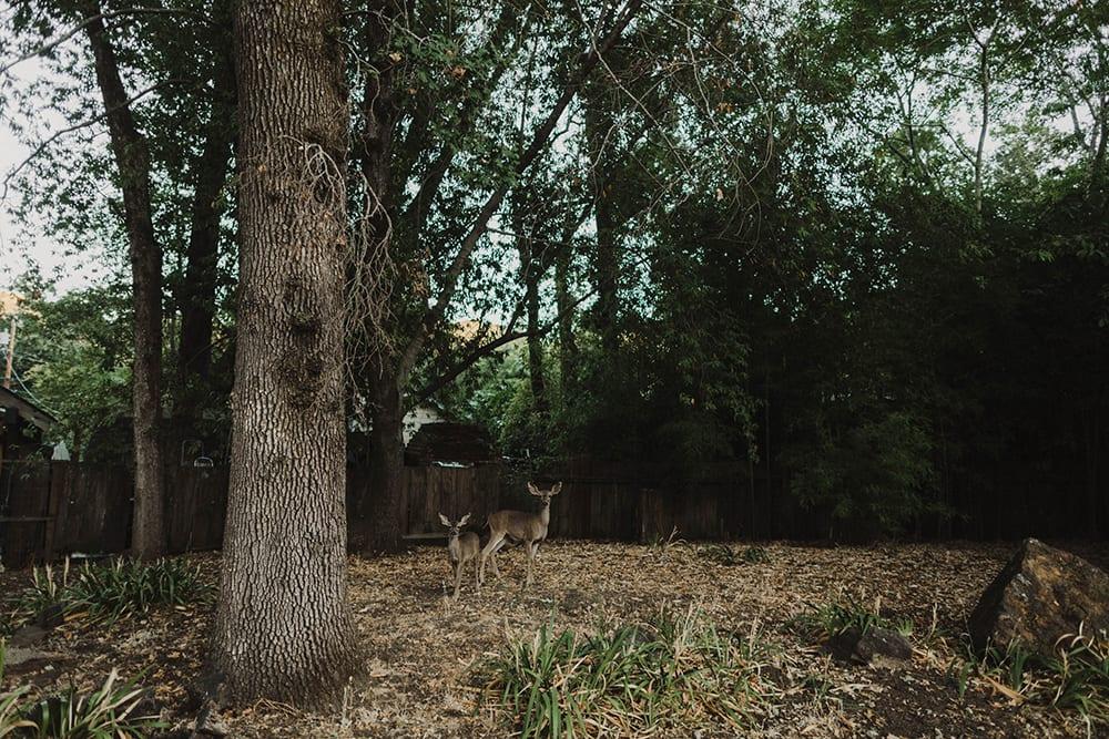 Deer Park Villa Wedding190.jpg