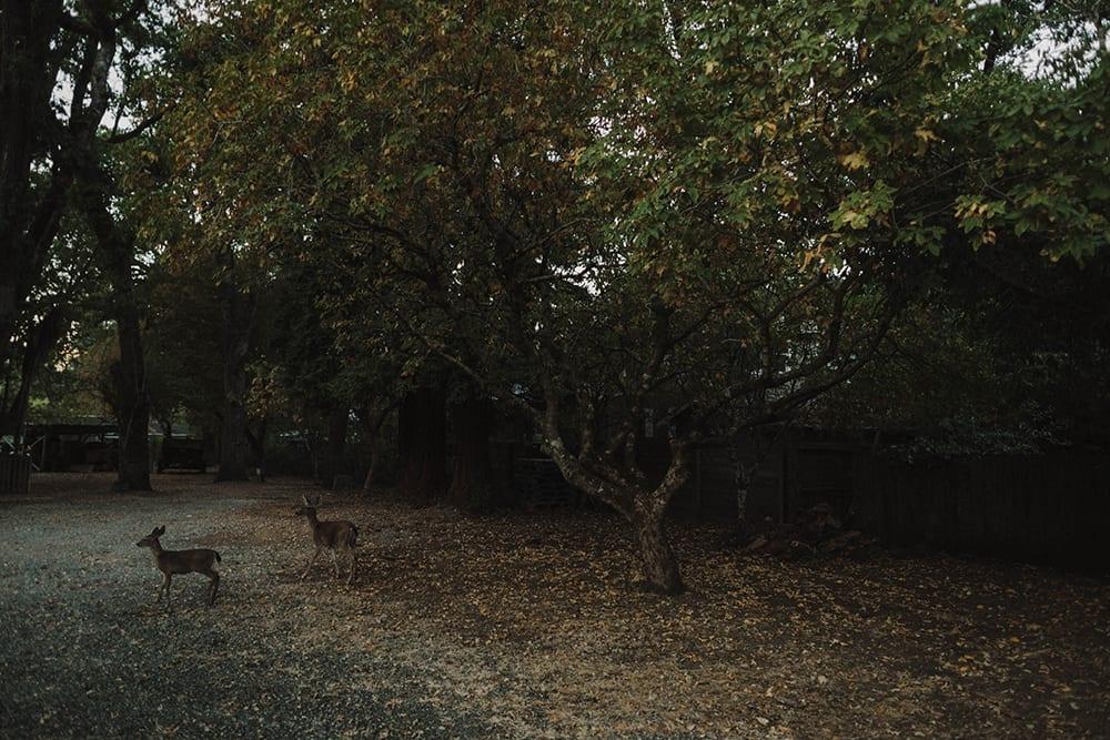 Deer Park Villa Wedding191.jpg