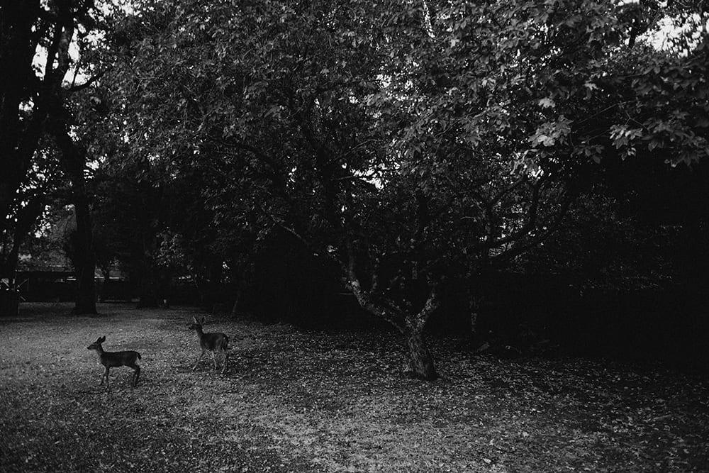 Deer Park Villa Wedding192.jpg