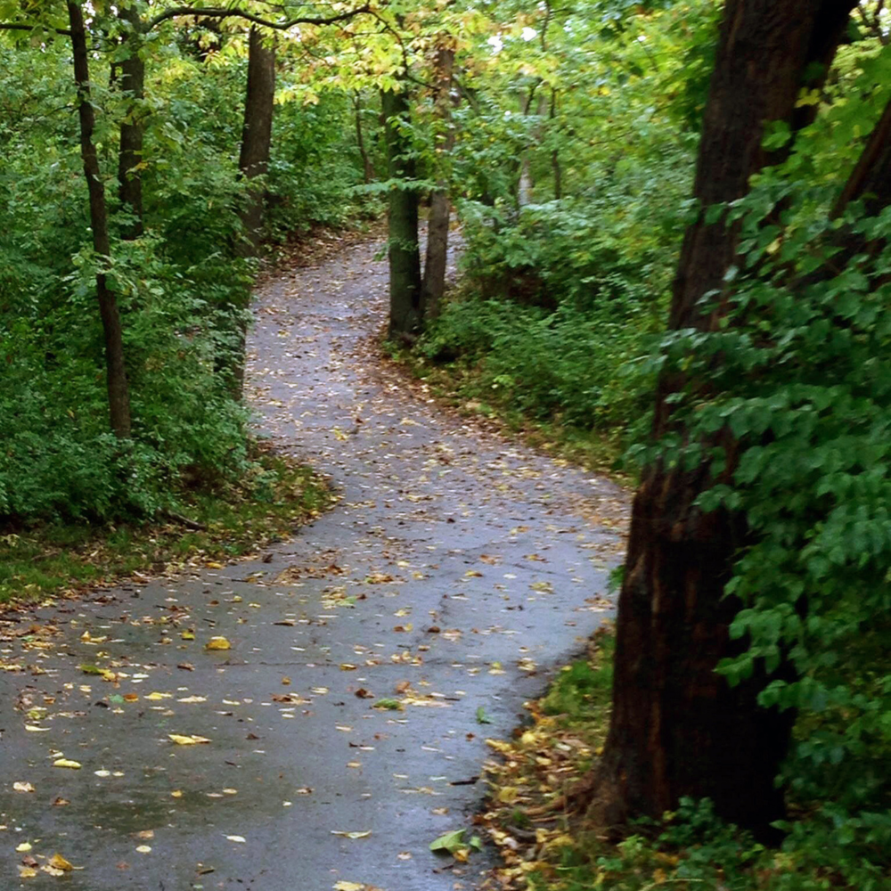Turkey Creek Trail after the rain.