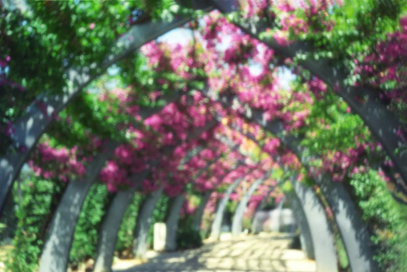 KS_stenope_www_09.jpg