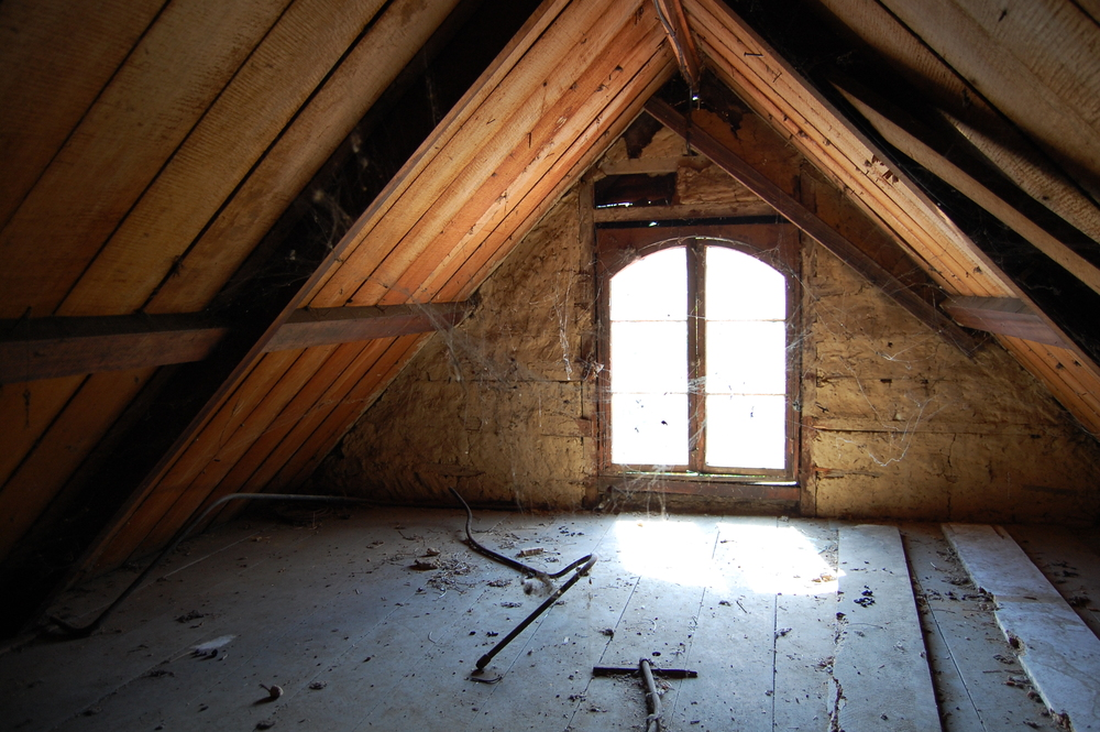 Mould Roof.JPG