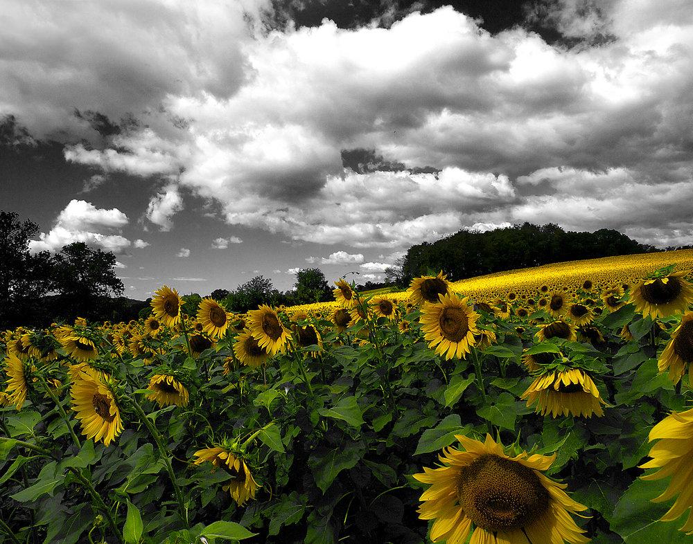 landscapes15.jpg