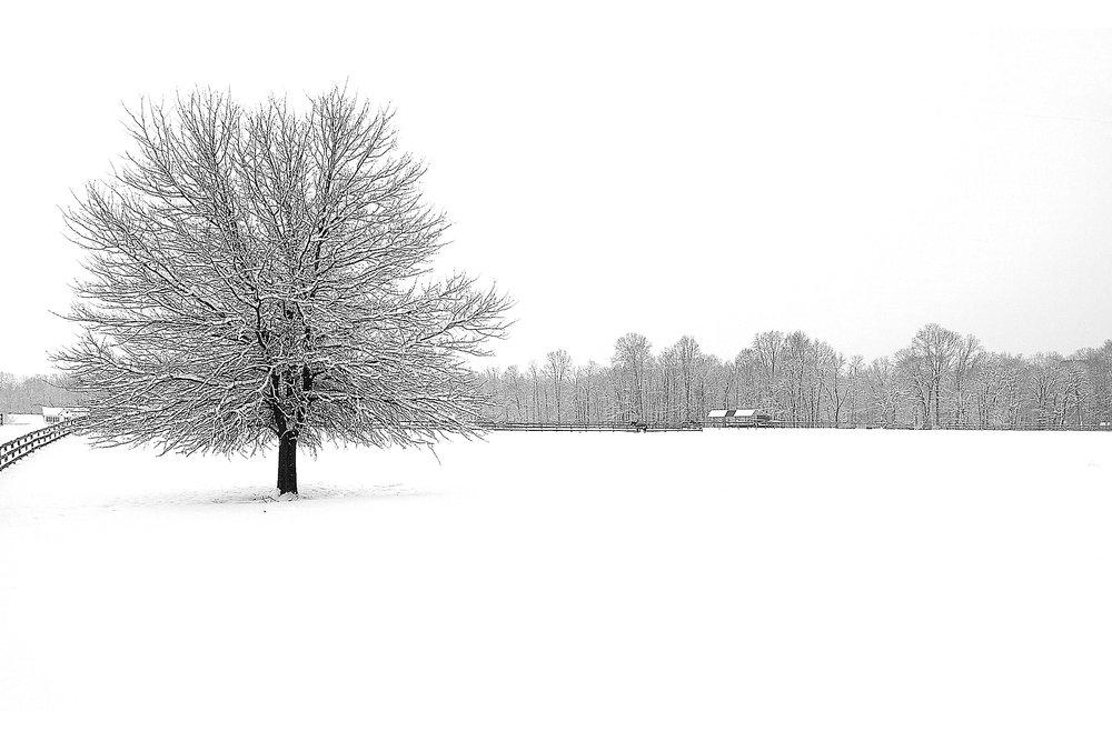 landscapes43.jpg