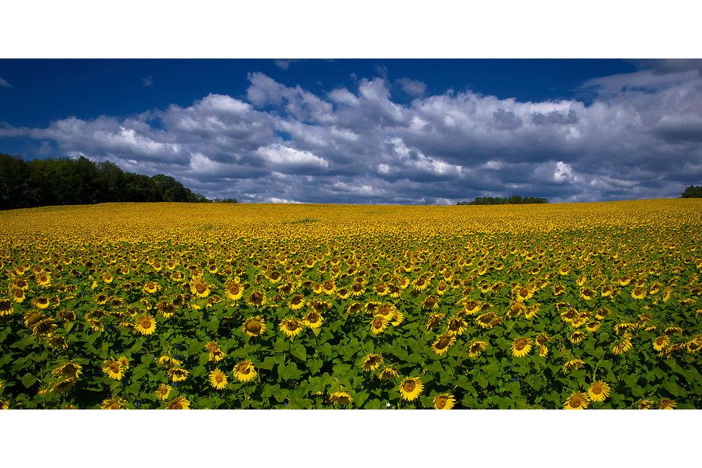 landscapes72.jpg