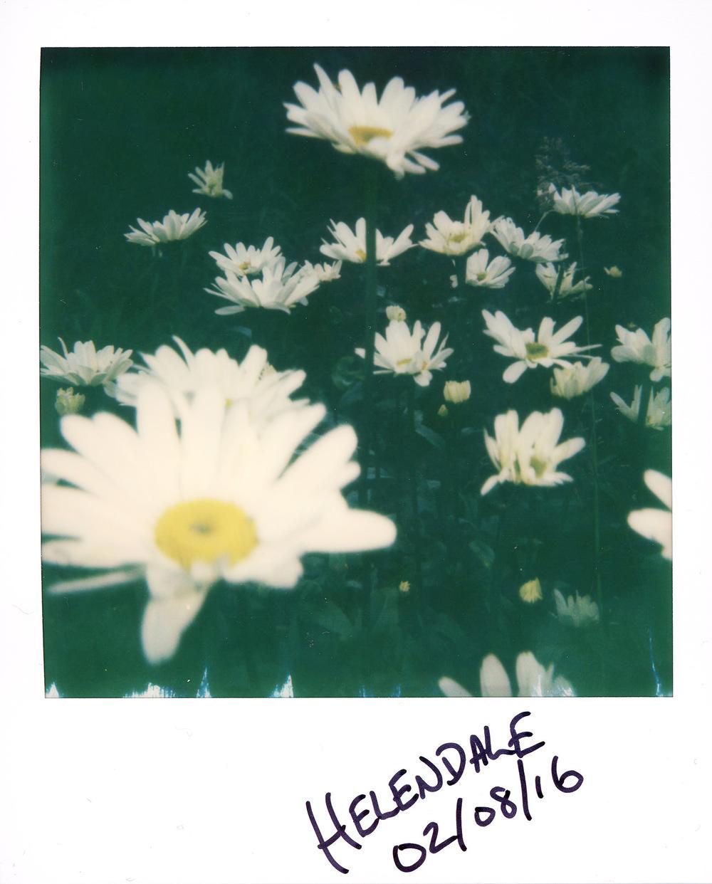 1608 Daisy Polaroid 035 LR.jpg