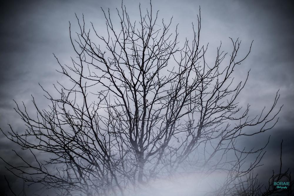 Boraie Photography - (www.boraiephotography.com) -51.JPG