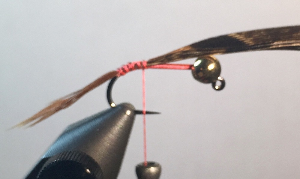 Step 2:  Tie in 4-5 Pheasant tail fibers. Same length as the hook. Flare down hook.
