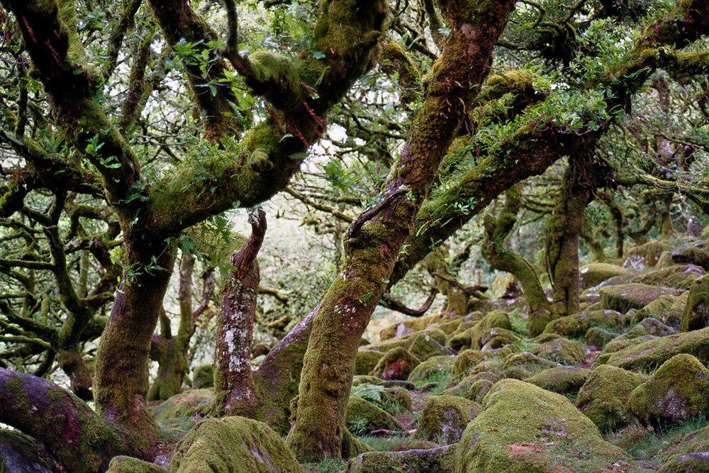 alice-connew-whitmans-wood-1.jpg