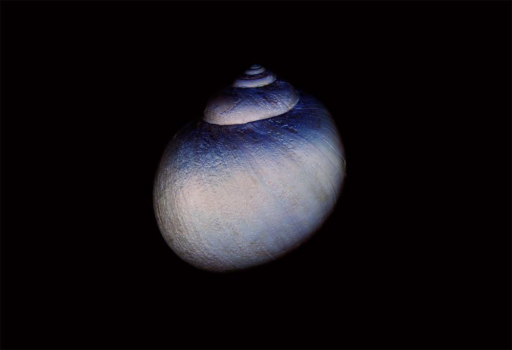 Seashell (001 inv) 2013