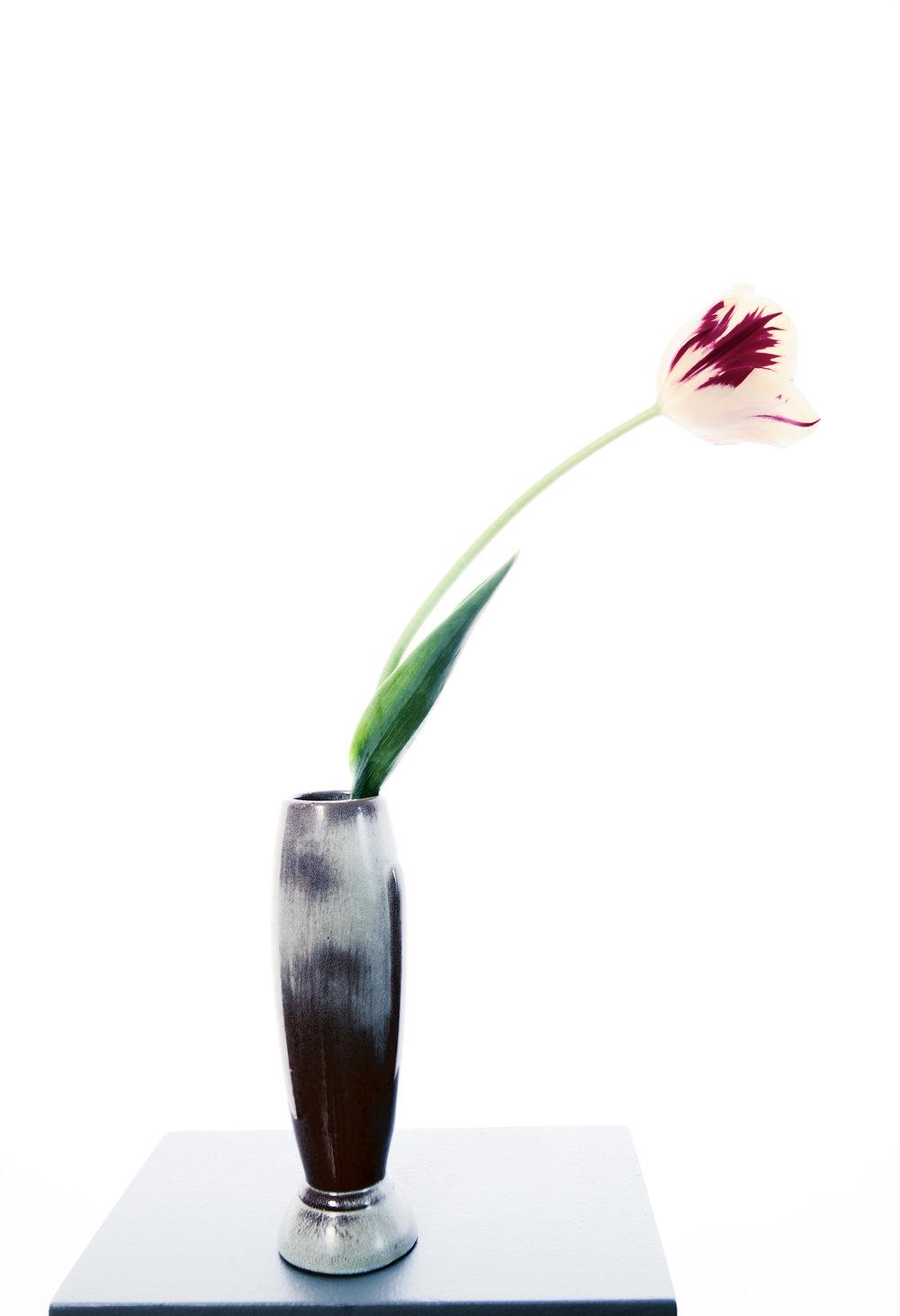 Flower Tulip 1, 2014
