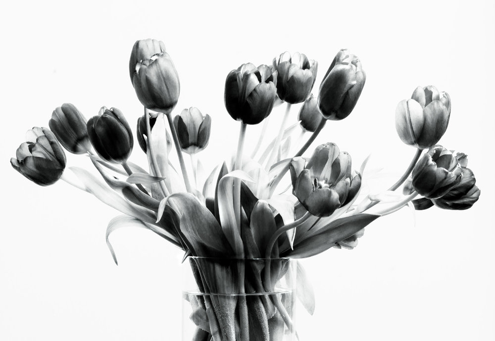 Flower:  Tulip Bunch 1b&w. 2017