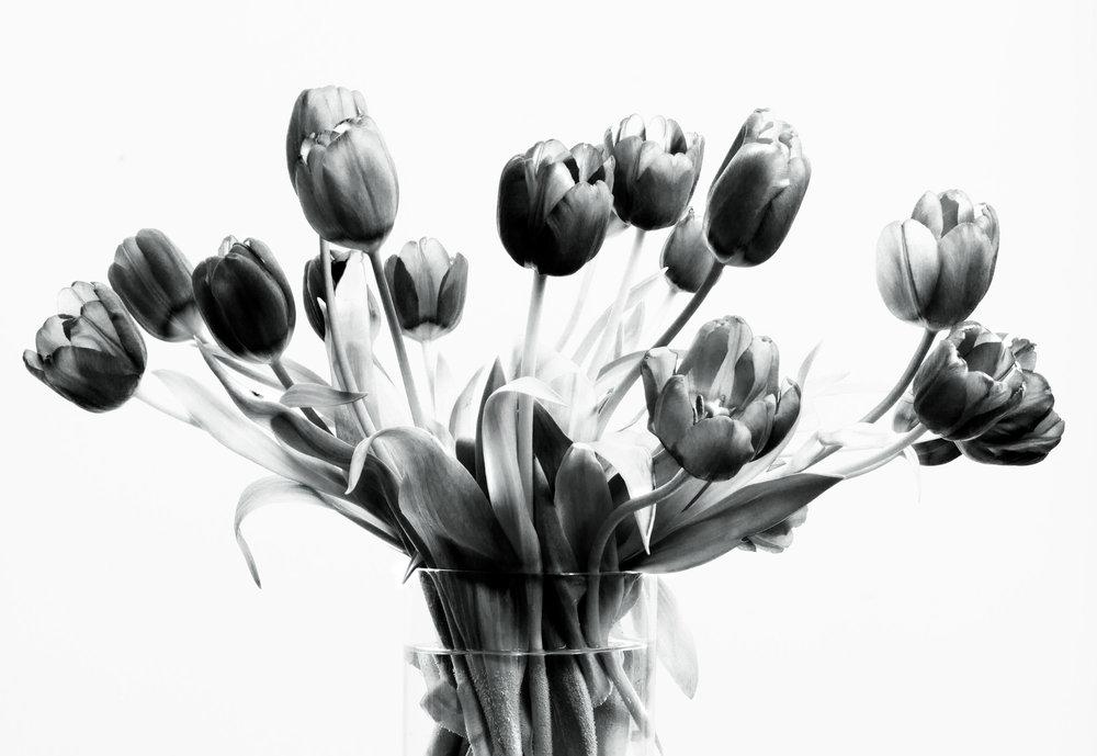 Flower:  Tulip Bunch 1b&w. 2017