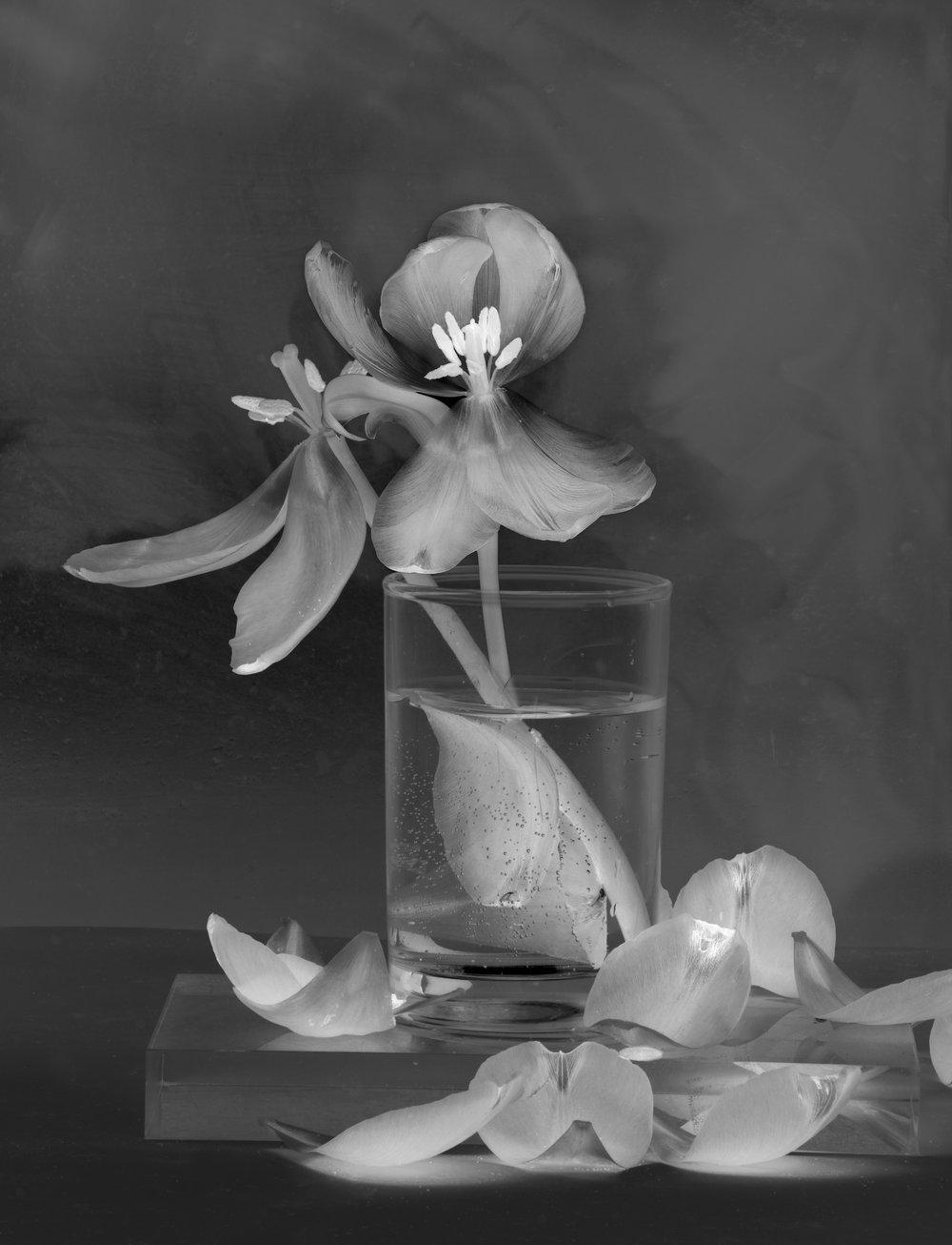 Flower : Tulip 14inv. 2017