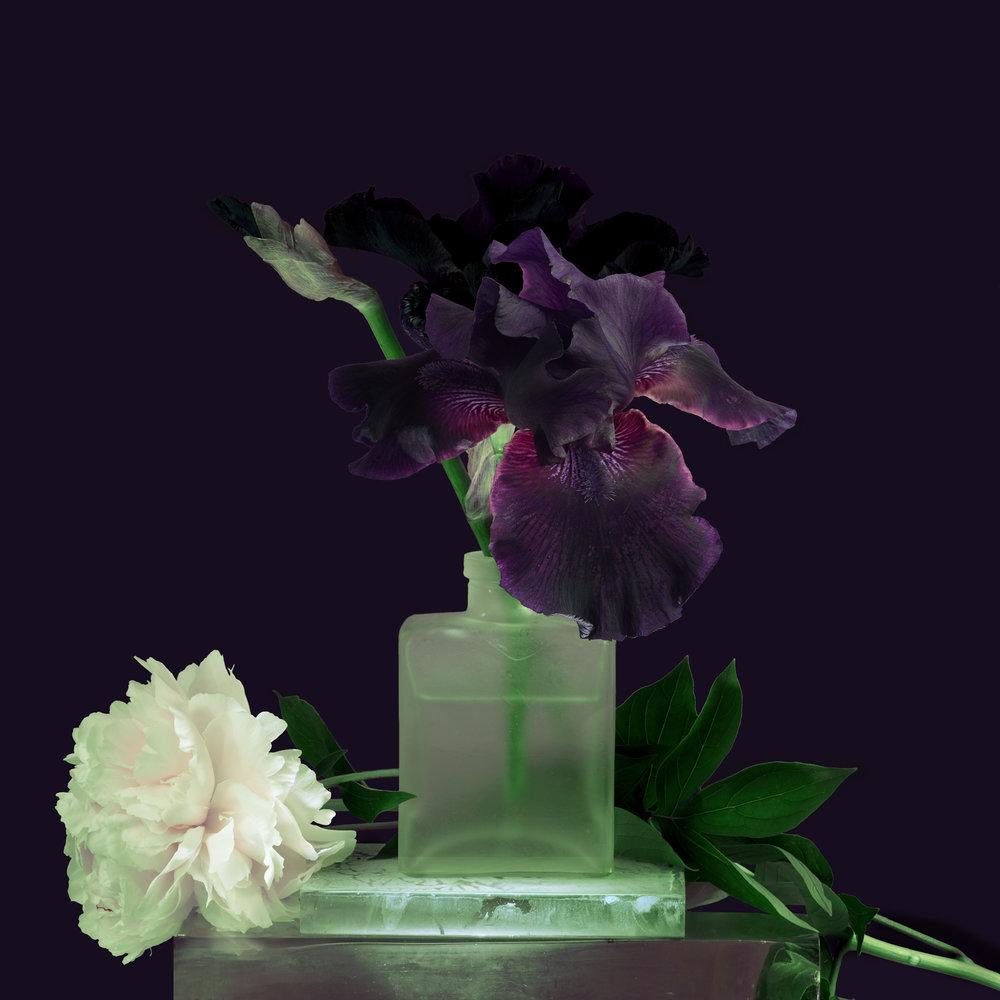 Flower-Purple-Iris-with-White-Peoni-2017