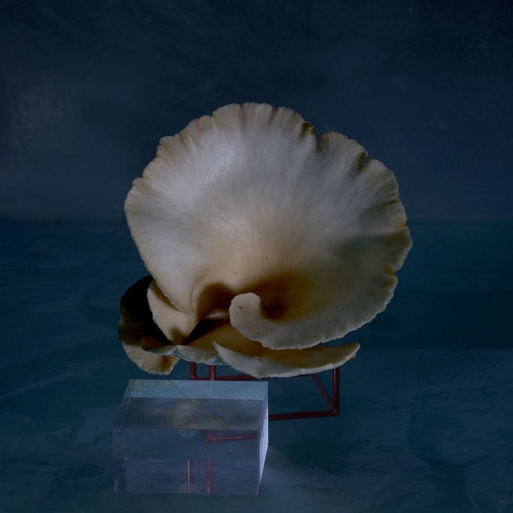 Mushroom ( oyster) with Object -5- 0ct. 2018