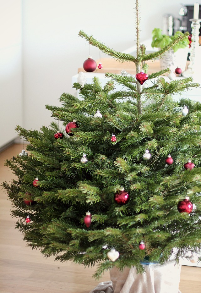 Living Christmas Tree 02 (1)