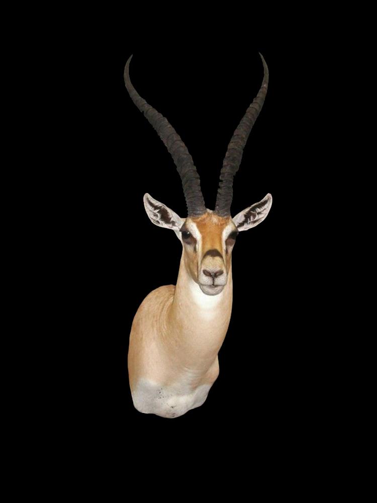 Gazelle Gallery