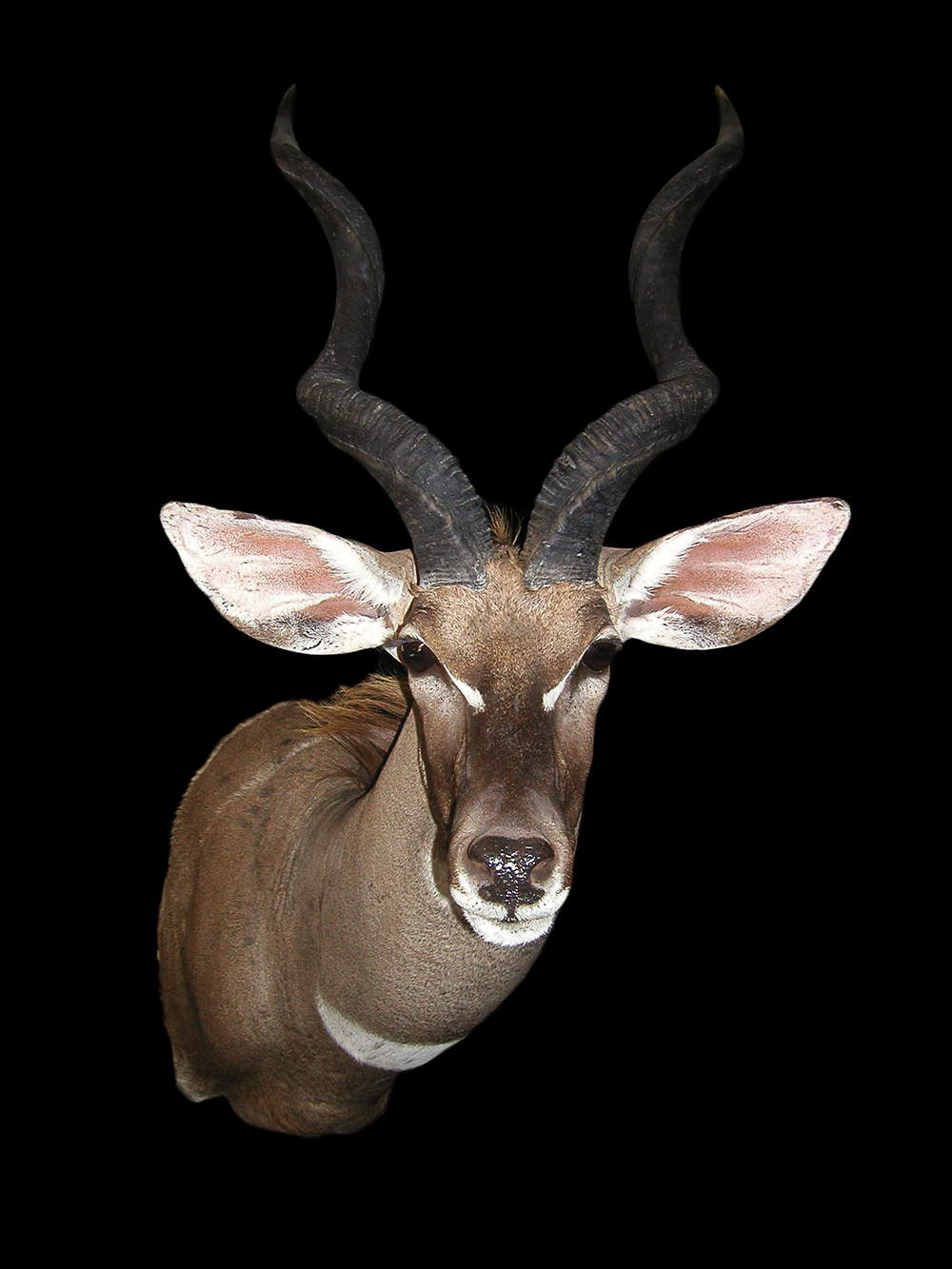 Kudu Gallery