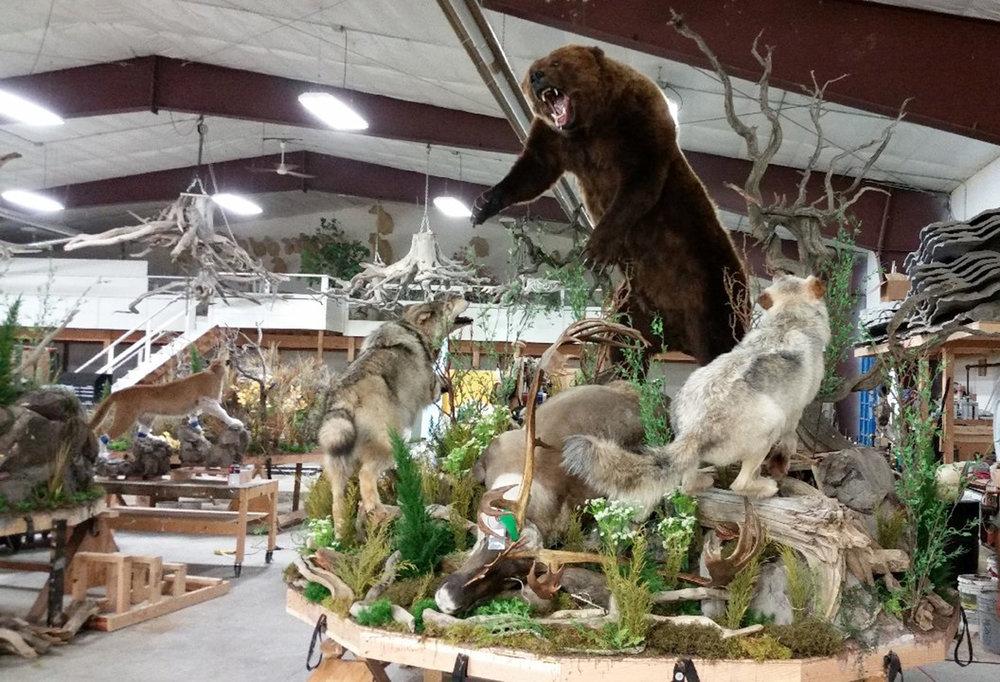 Wildlife Scenes 1.jpg
