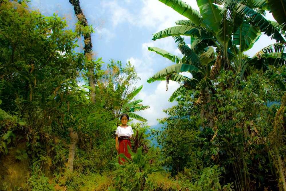 Guatemala-girl-in-woods.jpg