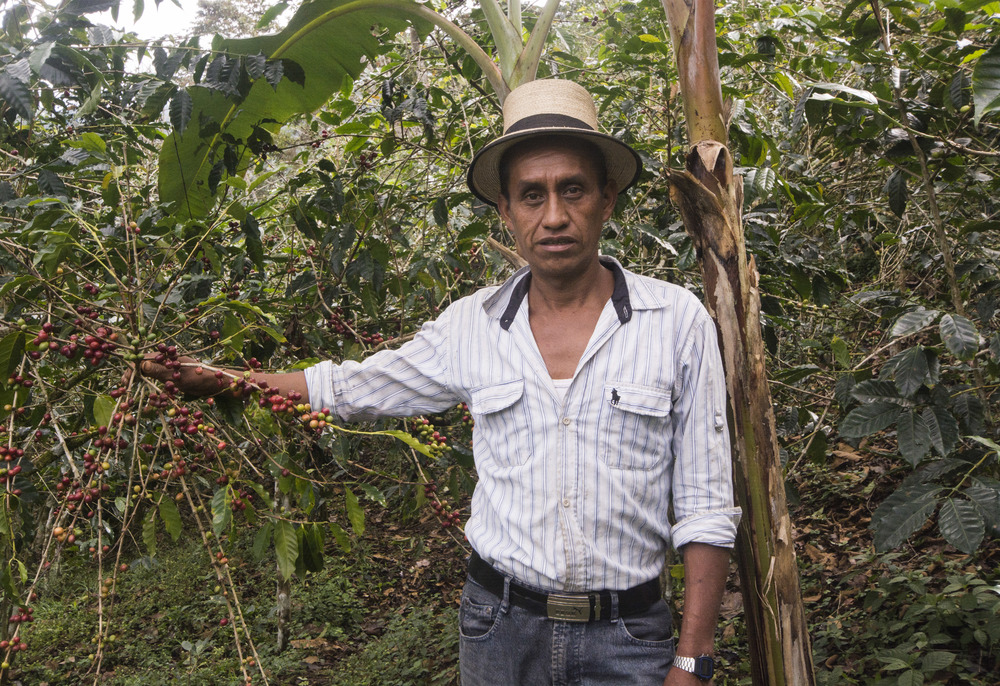 Julio Brito Cedillo, a coffee farmer in Chel, Quiche, Guateamala. Julio lost over 75% of his coffee harvest to La Roya last year. As part of the Roya Recovery Project he expects to triple his harvest this year, still down from his pre-rust days but with the help of others in the program he is learning to improve the health of his plants and secure his future.