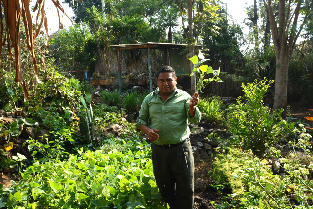 Francisco Cutzol Pop, educator and school gardens administrator at La Cumbre School, San Lucas Toliman, Guatemala.