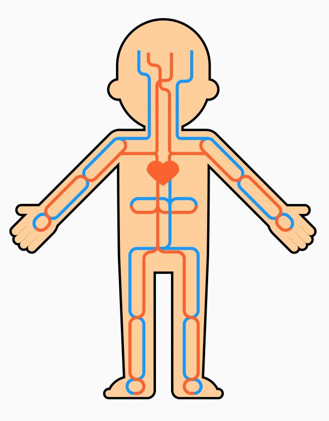 PECS Human Nervous System