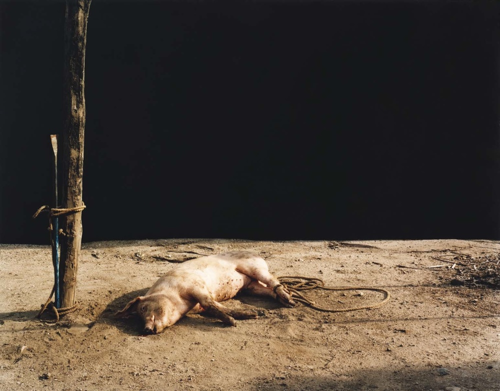 Trevor Appleson,  Death at Sunset , 2007. C-print, 49 1/2 x 62 1/2 inches.  © Trevor Appleson.