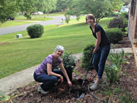 Planting a new rosebush.